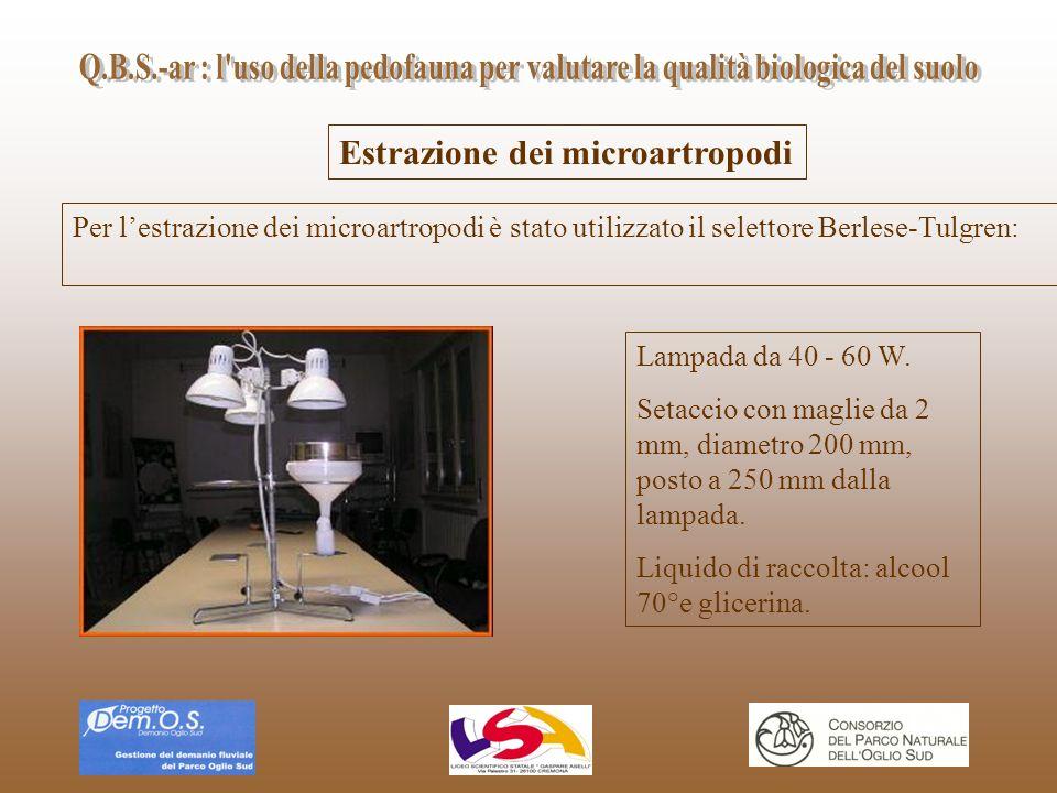 Estrazione dei microartropodi Per lestrazione dei microartropodi è stato utilizzato il selettore Berlese-Tulgren: Lampada da 40 - 60 W. Setaccio con m