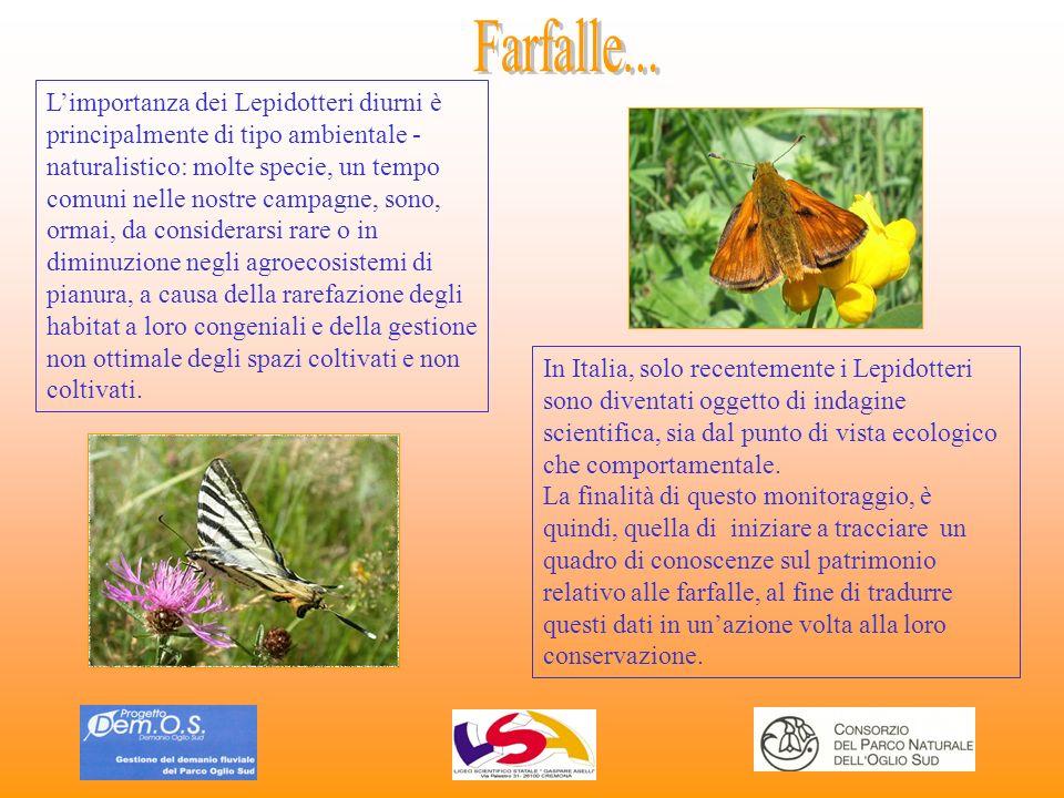 Limportanza dei Lepidotteri diurni è principalmente di tipo ambientale - naturalistico: molte specie, un tempo comuni nelle nostre campagne, sono, orm