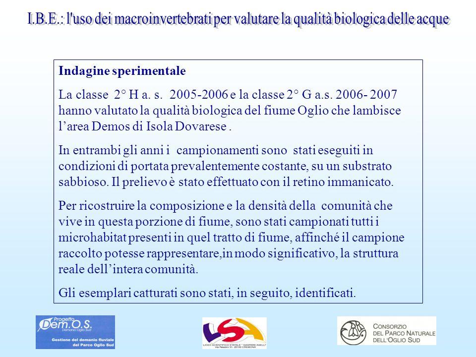Indagine sperimentale La classe 2° H a. s. 2005-2006 e la classe 2° G a.s. 2006- 2007 hanno valutato la qualità biologica del fiume Oglio che lambisce