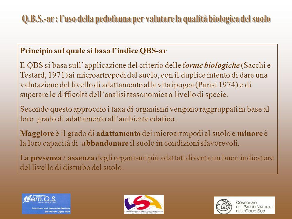 Principio sul quale si basa lindice QBS-ar Il QBS si basa sull applicazione del criterio delle forme biologiche (Sacchi e Testard, 1971) ai microartro