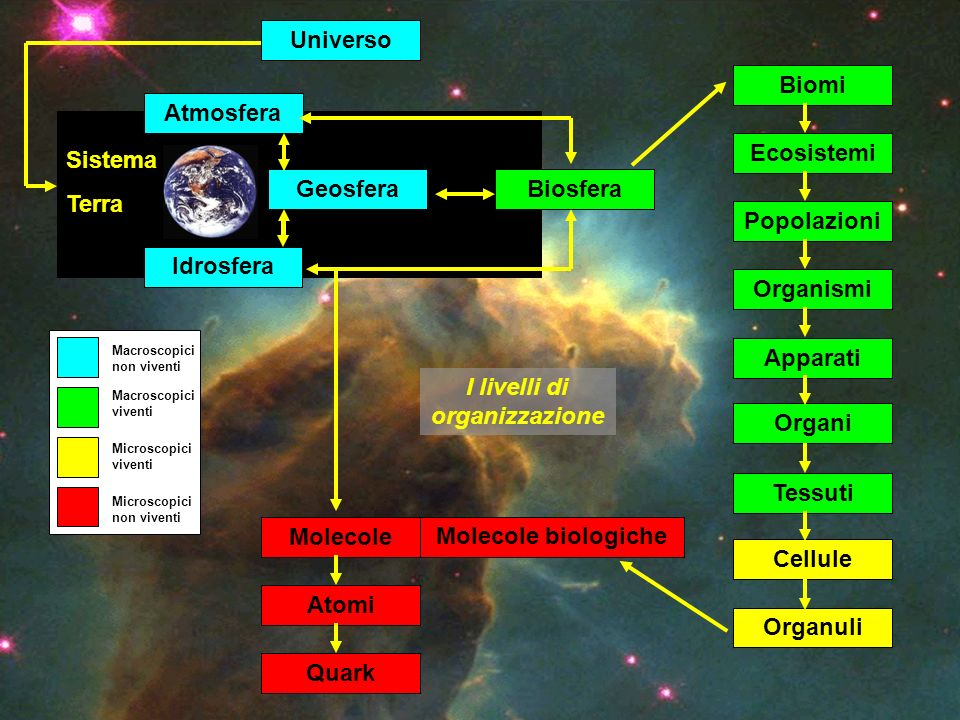 Universo Organismi Popolazioni Ecosistemi Biomi Apparati Organi Cellule Organuli Tessuti Molecole biologiche Molecole Atomi Quark Sistema Terra Idrosf