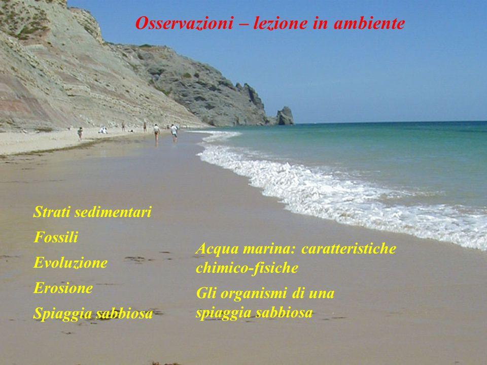 Strati sedimentari Spiaggia sabbiosa Evoluzione Acqua marina: caratteristiche chimico-fisiche Fossili Erosione Gli organismi di una spiaggia sabbiosa