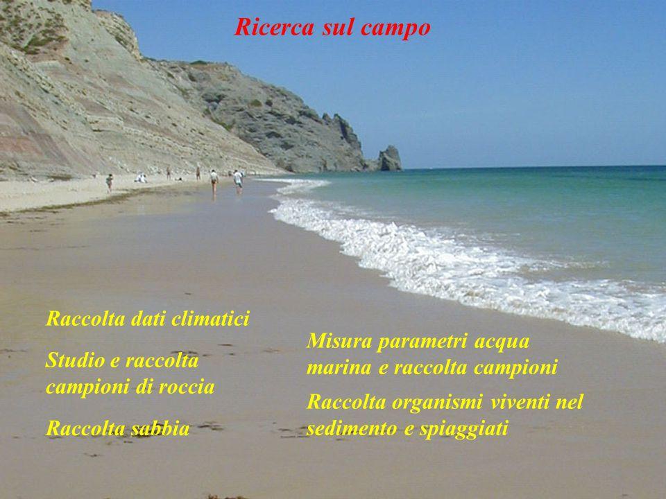 Ricerca sul campo Raccolta dati climatici Raccolta organismi viventi nel sedimento e spiaggiati Studio e raccolta campioni di roccia Raccolta sabbia M