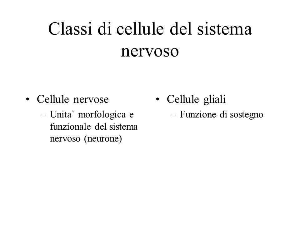 Classi di cellule del sistema nervoso Cellule nervose –Unita` morfologica e funzionale del sistema nervoso (neurone) Cellule gliali –Funzione di soste