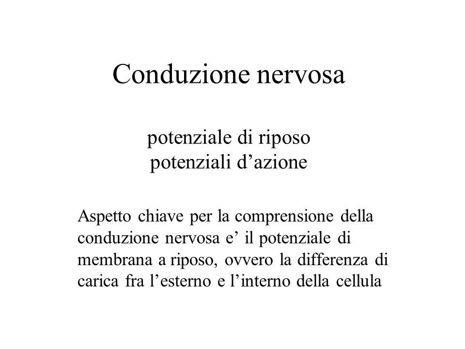 Conduzione nervosa potenziale di riposo potenziali dazione Aspetto chiave per la comprensione della conduzione nervosa e il potenziale di membrana a r