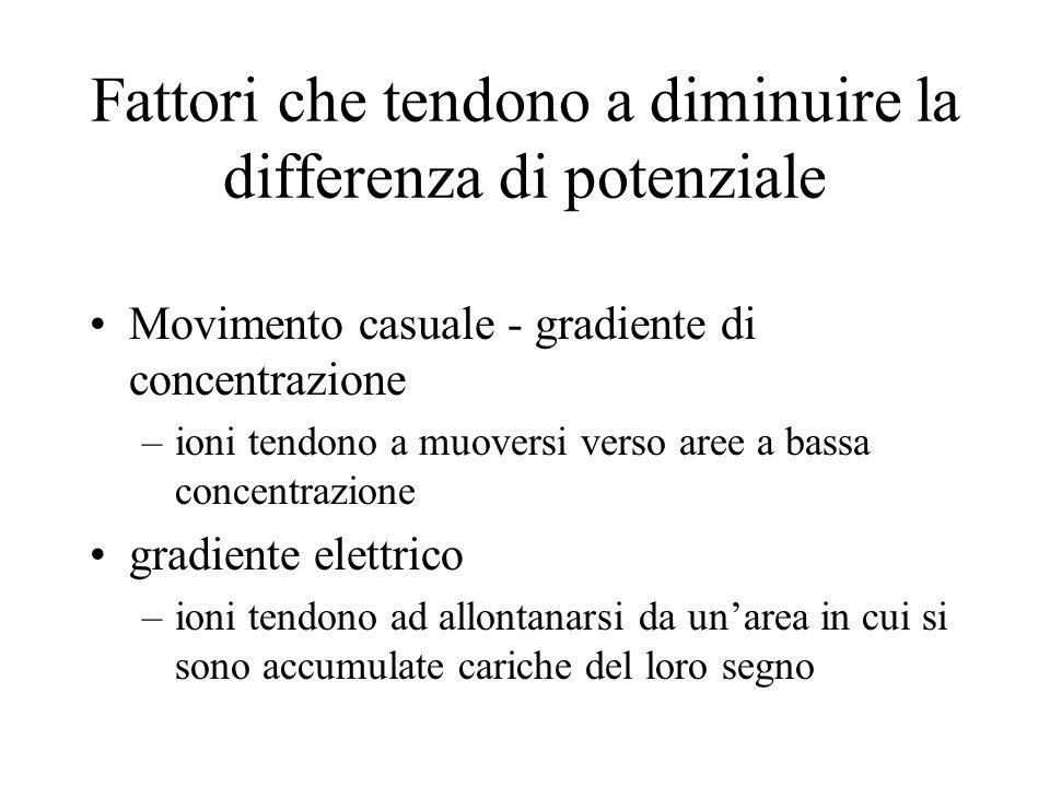 Fattori che tendono a diminuire la differenza di potenziale Movimento casuale - gradiente di concentrazione –ioni tendono a muoversi verso aree a bass