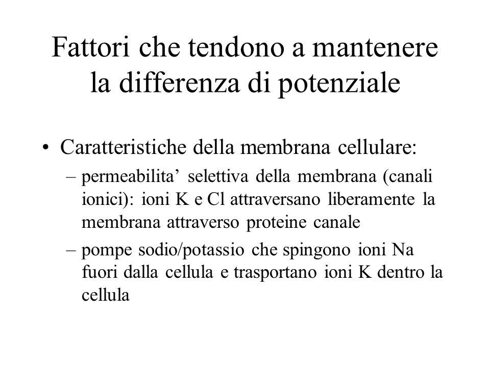 Fattori che tendono a mantenere la differenza di potenziale Caratteristiche della membrana cellulare: –permeabilita selettiva della membrana (canali i