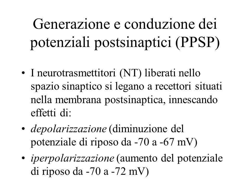 Generazione e conduzione dei potenziali postsinaptici (PPSP) I neurotrasmettitori (NT) liberati nello spazio sinaptico si legano a recettori situati n