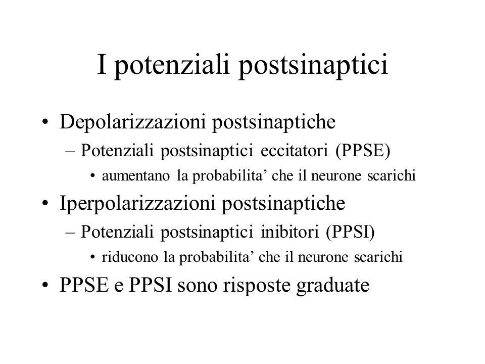 I potenziali postsinaptici Depolarizzazioni postsinaptiche –Potenziali postsinaptici eccitatori (PPSE) aumentano la probabilita che il neurone scarich