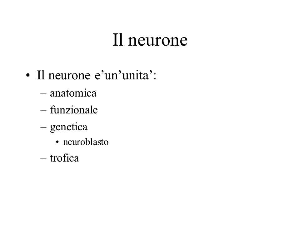 Il neurone Il neurone eununita: –anatomica –funzionale –genetica neuroblasto –trofica