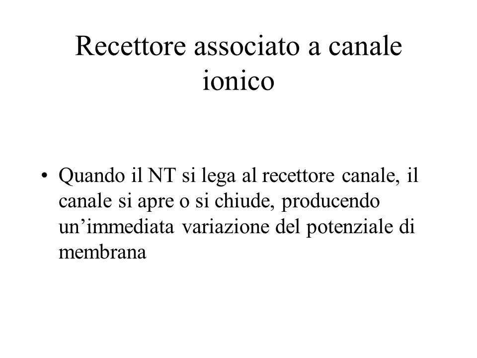 Recettore associato a canale ionico Quando il NT si lega al recettore canale, il canale si apre o si chiude, producendo unimmediata variazione del pot