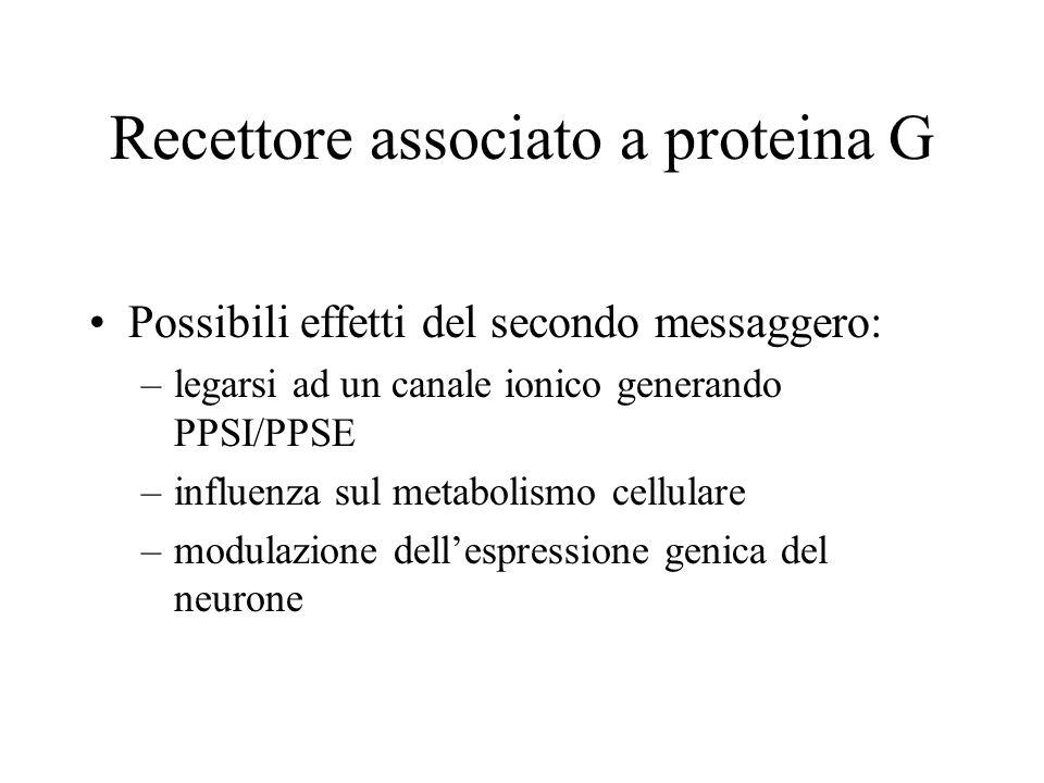 Recettore associato a proteina G Possibili effetti del secondo messaggero: –legarsi ad un canale ionico generando PPSI/PPSE –influenza sul metabolismo