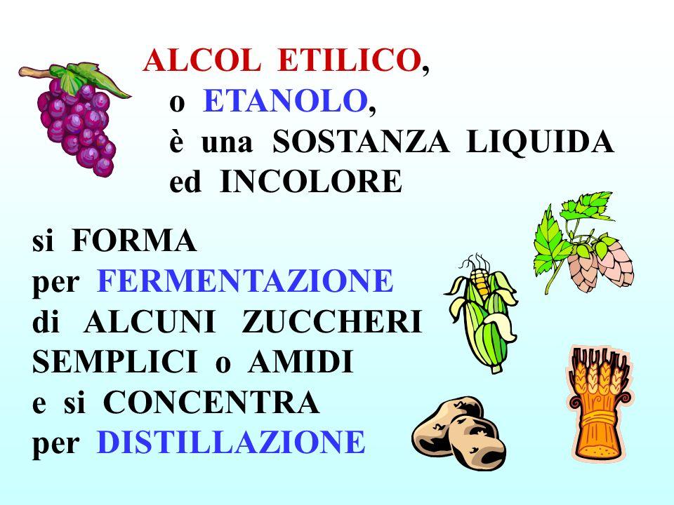 ALCOL ETILICO, o ETANOLO, è una SOSTANZA LIQUIDA ed INCOLORE si FORMA per FERMENTAZIONE di ALCUNI ZUCCHERI SEMPLICI o AMIDI e si CONCENTRA per DISTILLAZIONE