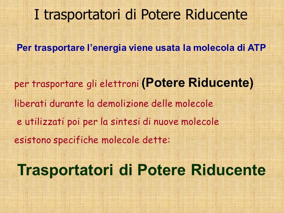 I trasportatori di Potere Riducente per trasportare gli elettroni (Potere Riducente) liberati durante la demolizione delle molecole e utilizzati poi p