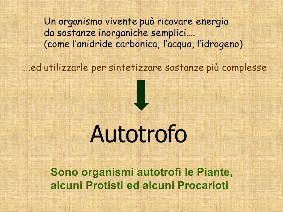 Sono organismi autotrofi le Piante, alcuni Protisti ed alcuni Procarioti Un organismo vivente può ricavare energia da sostanze inorganiche semplici….
