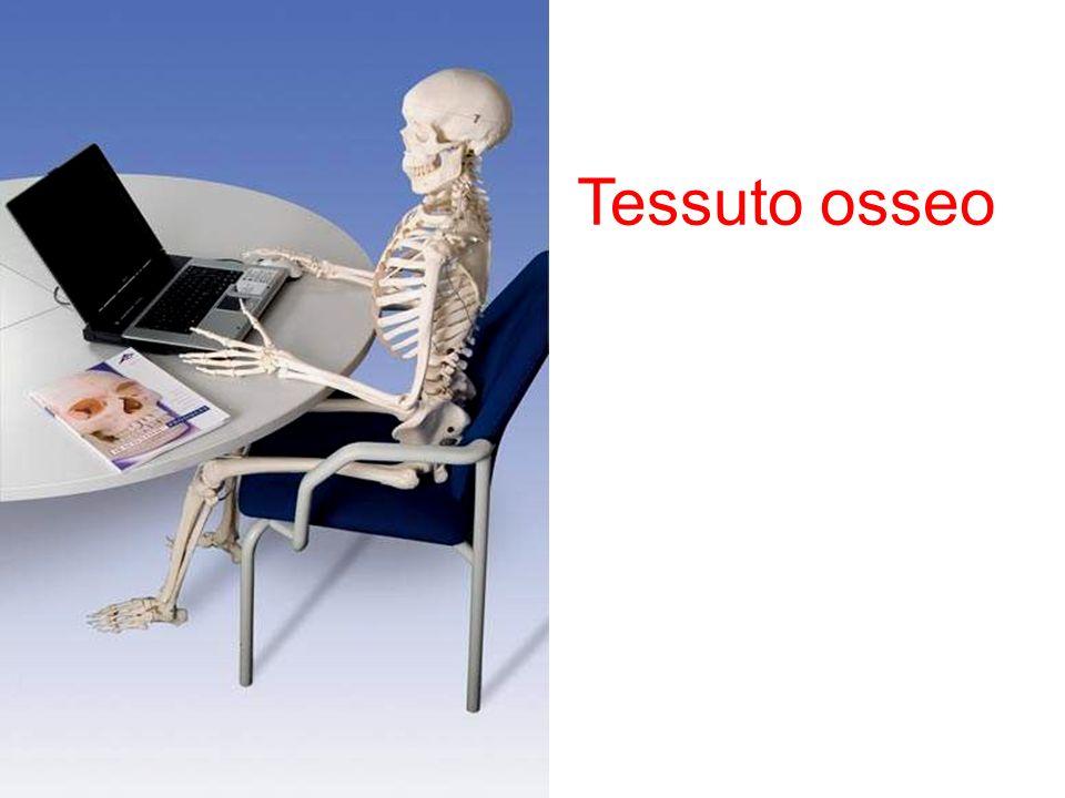 Tessuto osseo