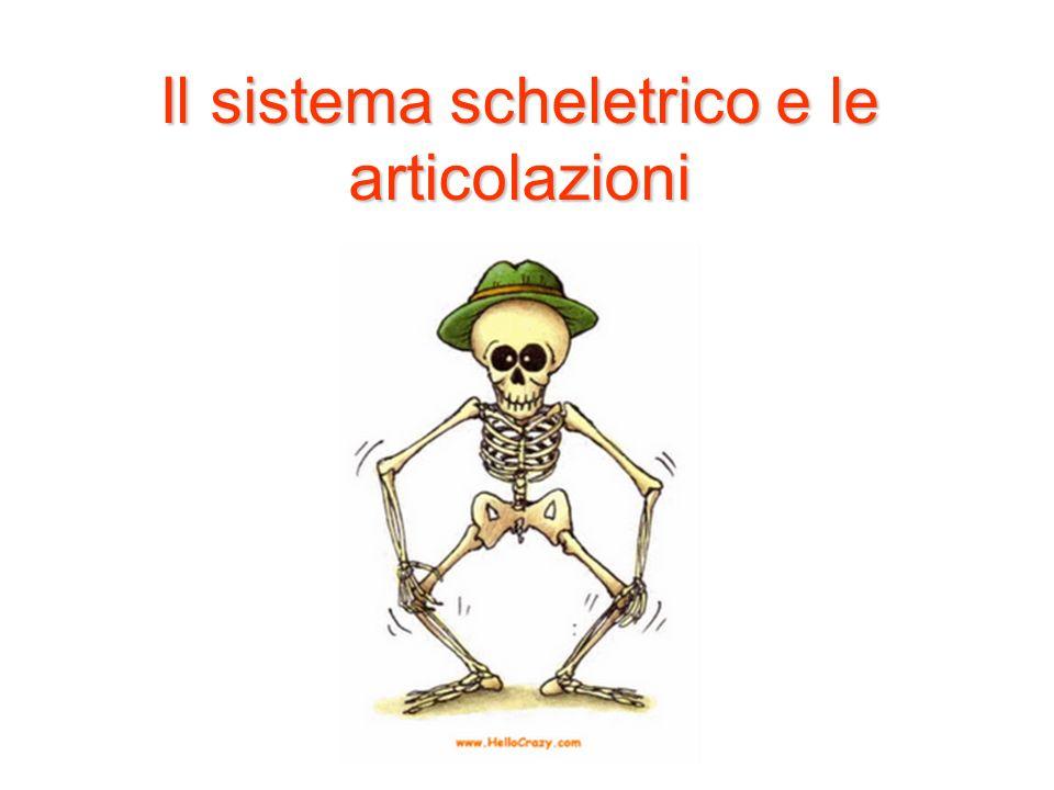 Il sistema scheletrico e le articolazioni