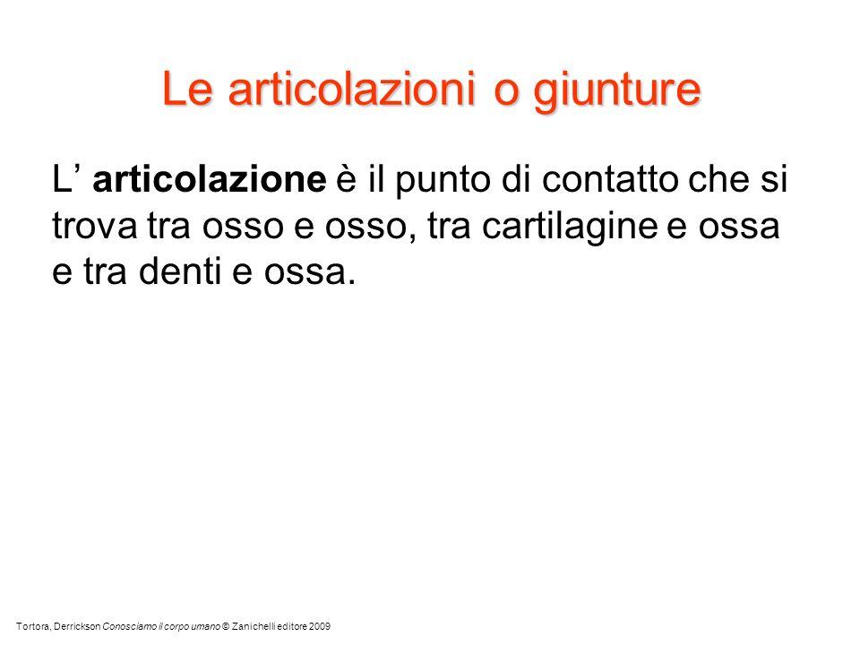 Le articolazioni o giunture L articolazione è il punto di contatto che si trova tra osso e osso, tra cartilagine e ossa e tra denti e ossa. Tortora, D