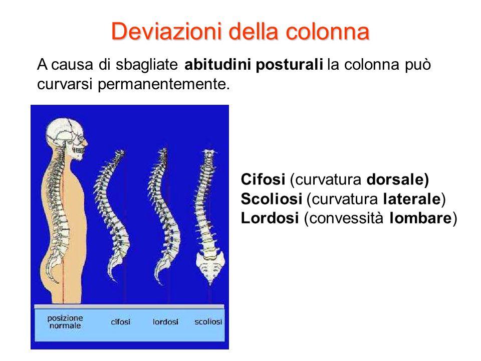 Deviazioni della colonna A causa di sbagliate abitudini posturali la colonna può curvarsi permanentemente. Cifosi (curvatura dorsale) Scoliosi (curvat