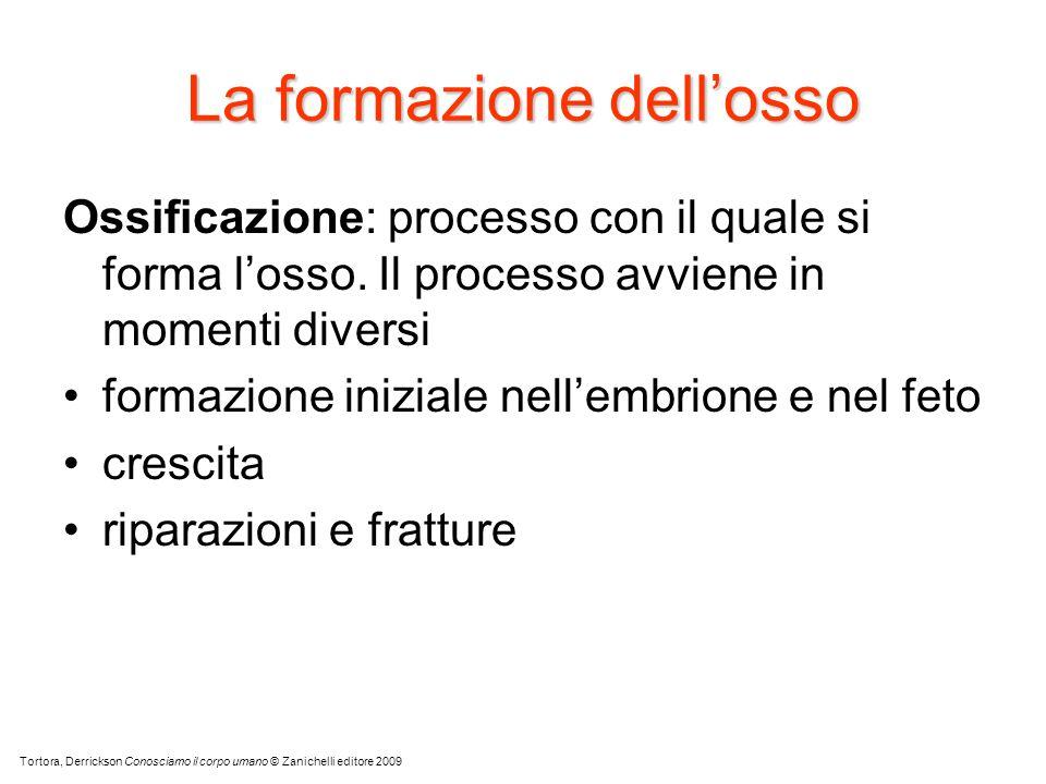 La formazione dellosso Ossificazione: processo con il quale si forma losso. Il processo avviene in momenti diversi formazione iniziale nellembrione e