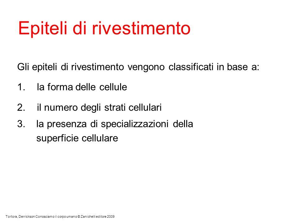 Epiteli di rivestimento Gli epiteli di rivestimento vengono classificati in base a: 1.la forma delle cellule 2.il numero degli strati cellulari 3. la