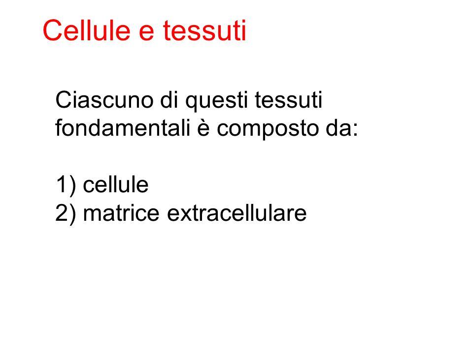 Ciascuno di questi tessuti fondamentali è composto da: 1) cellule 2) matrice extracellulare