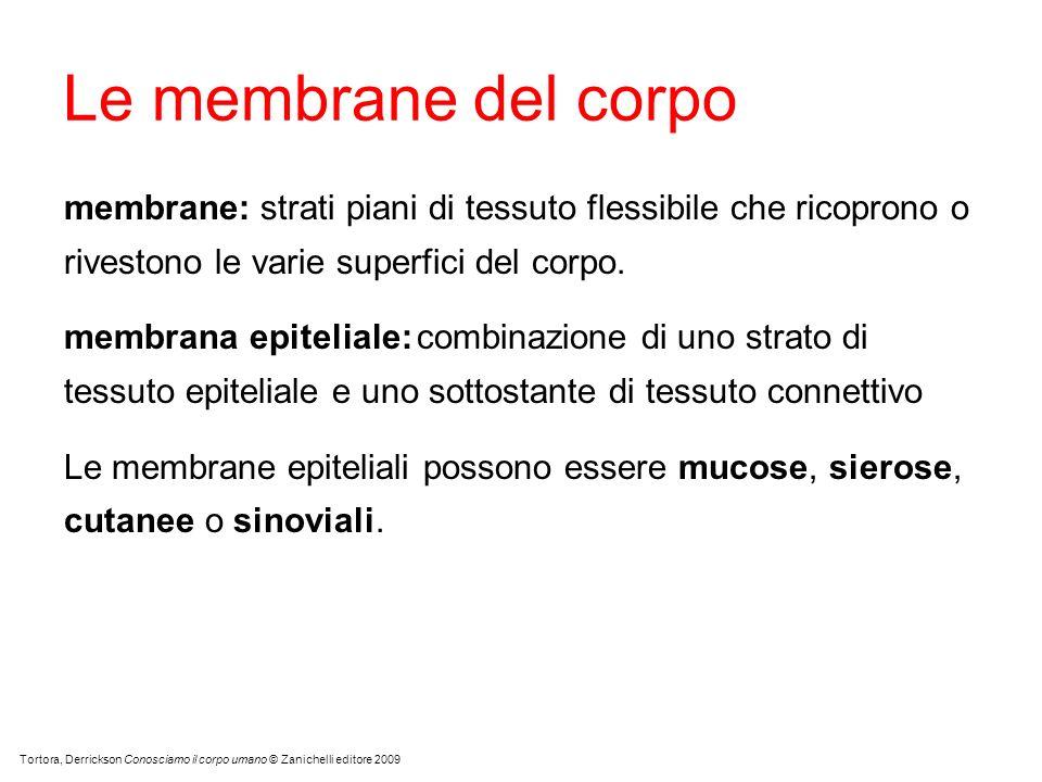 Mucosa La membrana mucosa riveste le cavità interne degli organi che comunicano con lesterno.