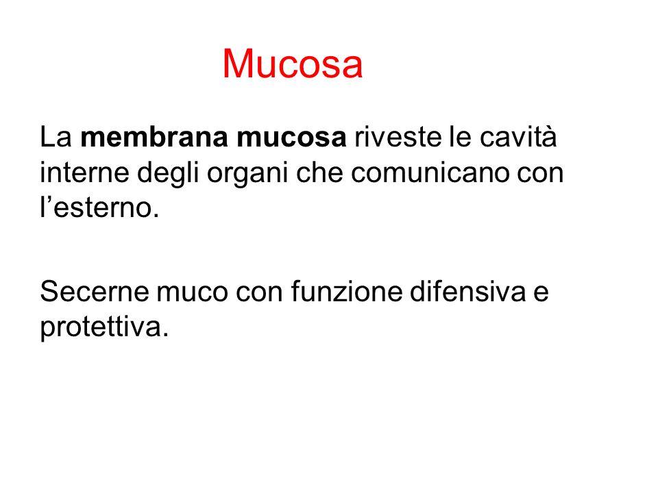 Mucosa La membrana mucosa riveste le cavità interne degli organi che comunicano con lesterno. Secerne muco con funzione difensiva e protettiva.