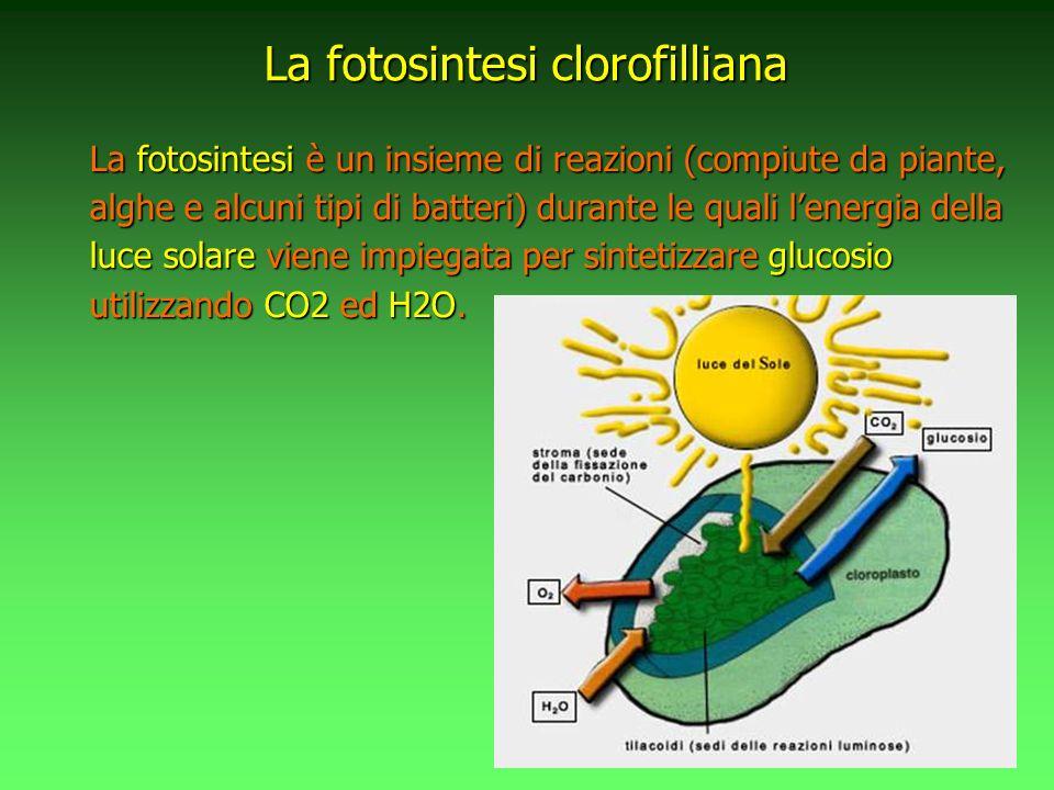 La La fotosintesi è un insieme di reazioni (compiute da piante, alghe e alcuni tipi di batteri) durante le quali lenergia della luce solare solare vie