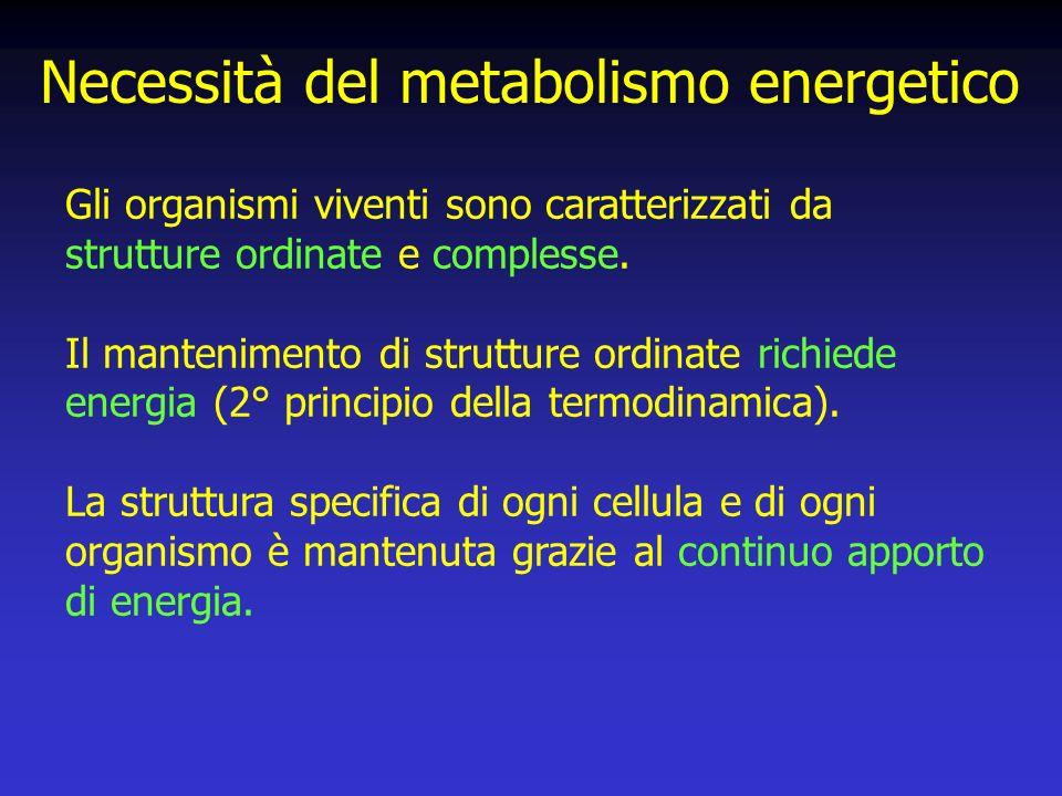 Necessità del metabolismo energetico Gli organismi viventi sono caratterizzati da strutture ordinate e complesse.