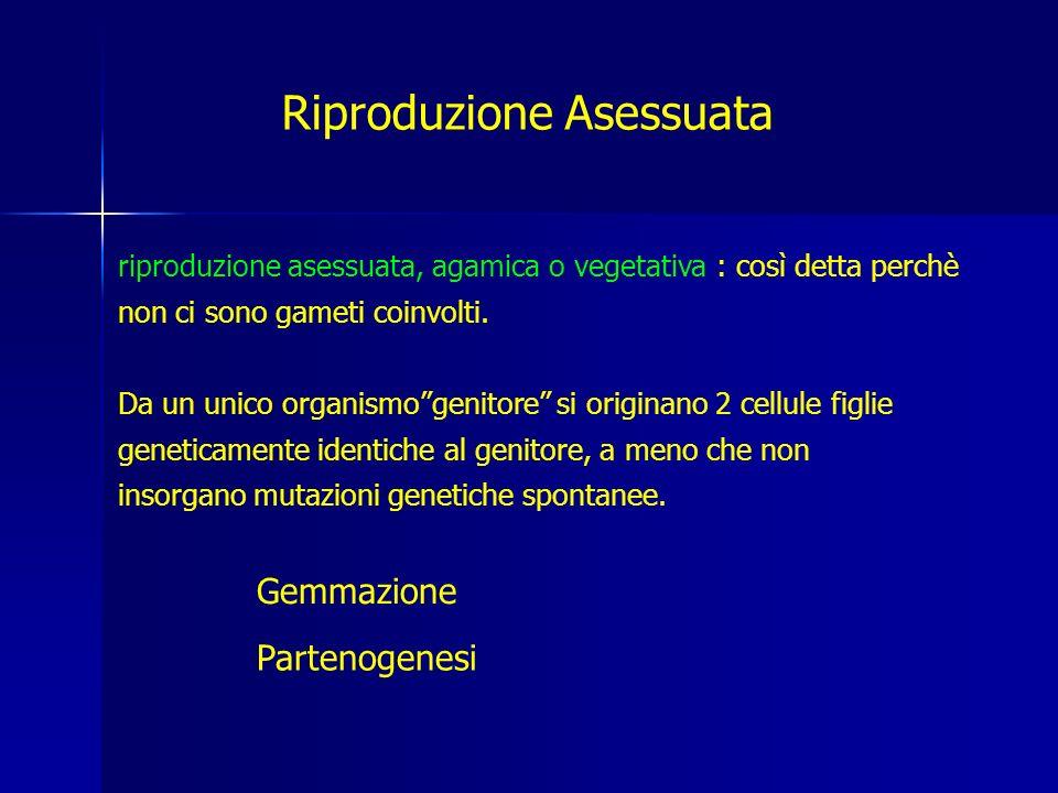riproduzione asessuata, agamica o vegetativa : così detta perchè non ci sono gameti coinvolti.
