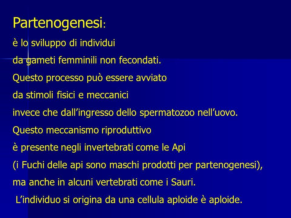 Partenogenesi : è lo sviluppo di individui da gameti femminili non fecondati.
