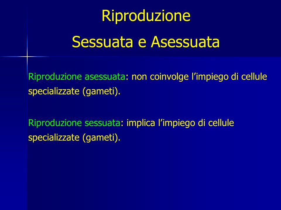 Riproduzione Sessuata e Asessuata Riproduzione asessuata: non coinvolge limpiego di cellule specializzate (gameti).