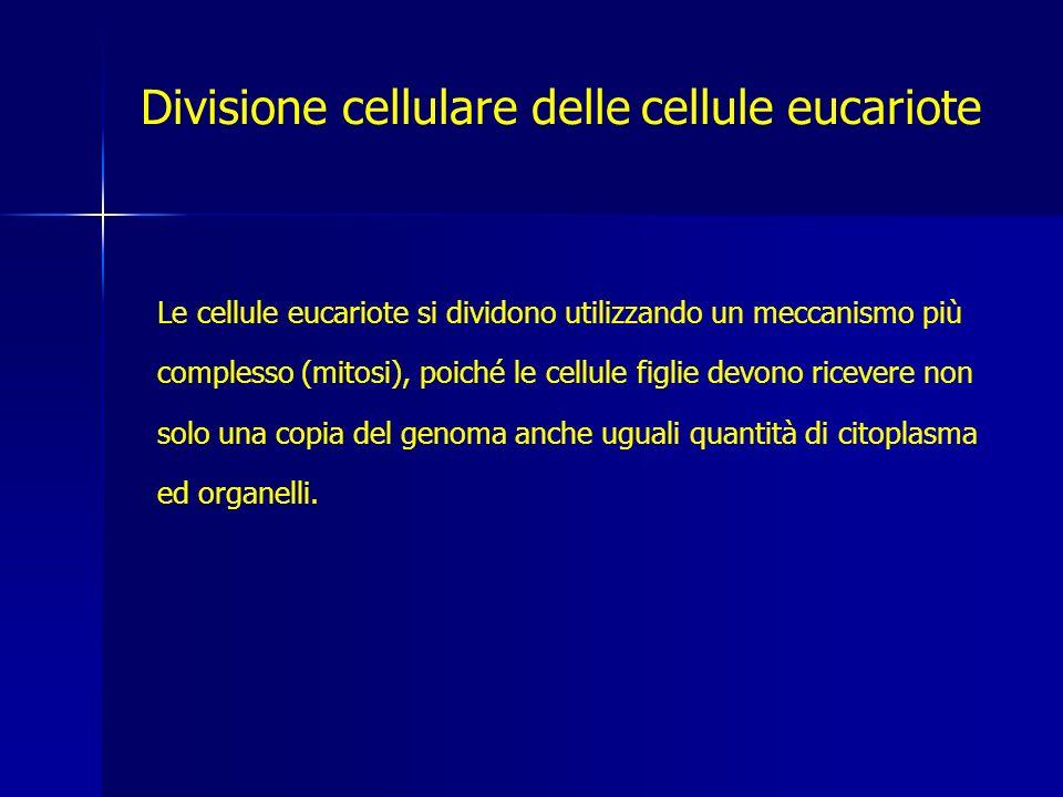 Le cellule eucariote si dividono utilizzando un meccanismo più complesso (mitosi), poiché le cellule figlie devono ricevere non solo una copia del genoma anche uguali quantità di citoplasma ed organelli.