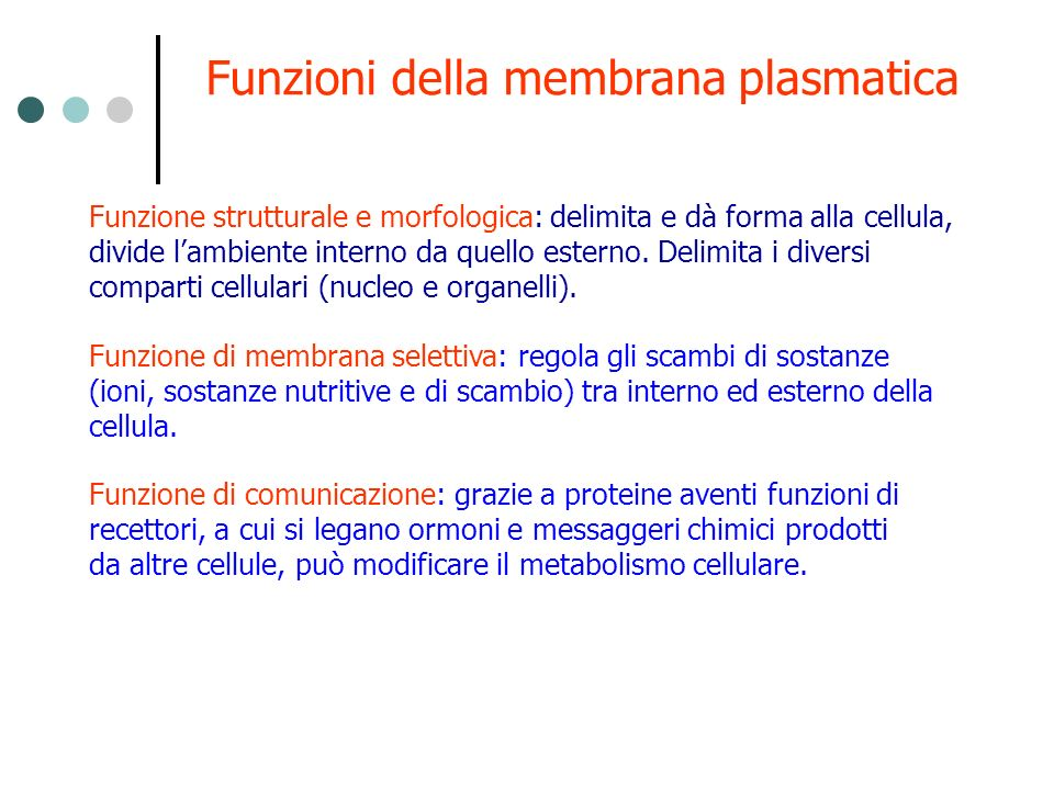 Funzioni della membrana plasmatica Funzione strutturale e morfologica: delimita e dà forma alla cellula, divide lambiente interno da quello esterno. D