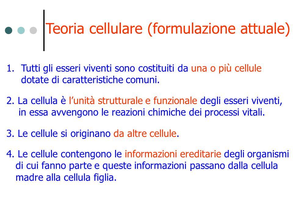 1.Tutti gli esseri viventi sono costituiti da una o più cellule dotate di caratteristiche comuni. 2. La cellula è lunità strutturale e funzionale degl
