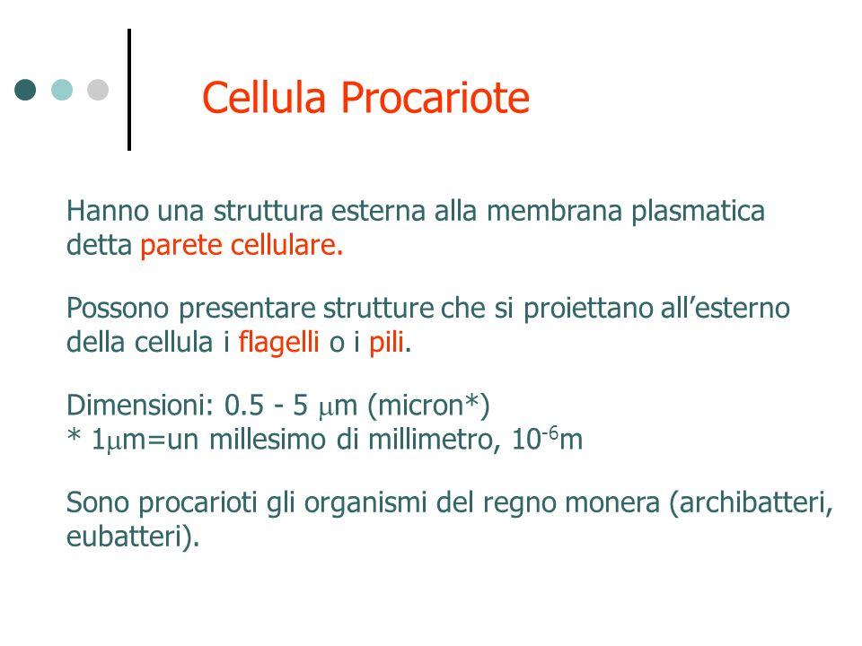 Cellula Procariote Possono presentare strutture che si proiettano allesterno della cellula i flagelli o i pili. Hanno una struttura esterna alla membr