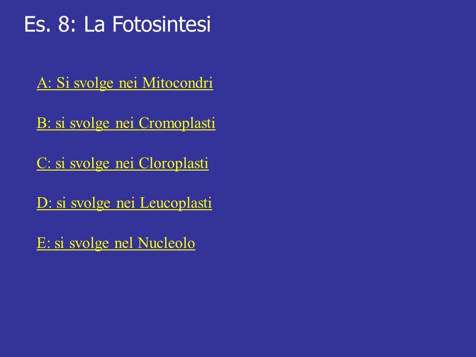 Es. 8: La Fotosintesi A: Si svolge nei Mitocondri B: si svolge nei Cromoplasti C: si svolge nei Cloroplasti D: si svolge nei Leucoplasti E: si svolge