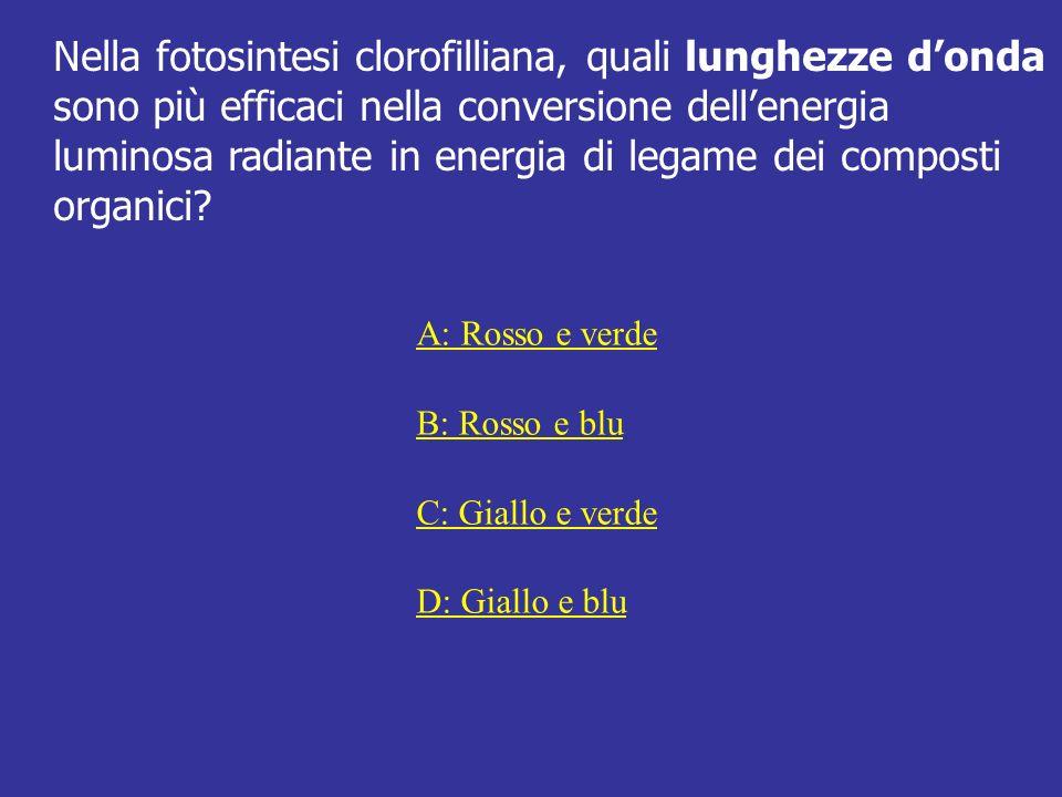 Nella fotosintesi clorofilliana, quali lunghezze donda sono più efficaci nella conversione dellenergia luminosa radiante in energia di legame dei comp