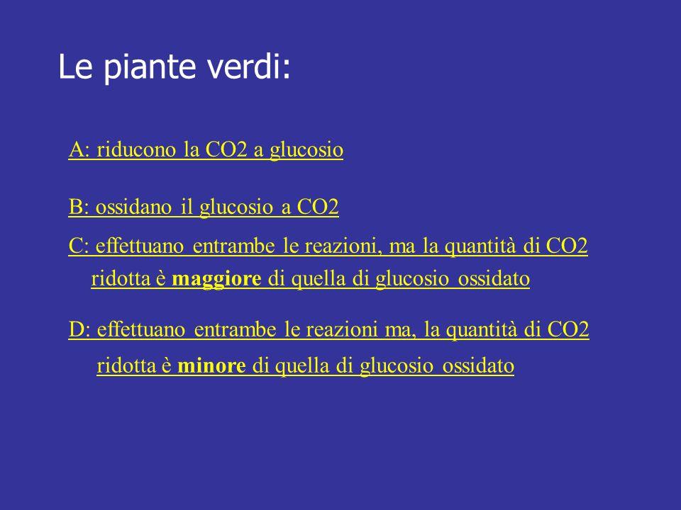 Le piante verdi: A: riducono la CO2 a glucosio B: ossidano il glucosio a CO2 C: effettuano entrambe le reazioni, ma la quantità di CO2 ridotta è maggi