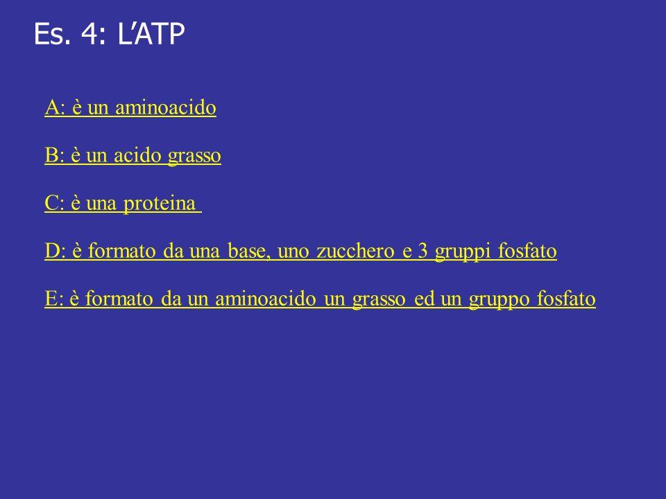 Es. 4: LATP A: è un aminoacido B: è un acido grasso C: è una proteina D: è formato da una base, uno zucchero e 3 gruppi fosfato E: è formato da un ami