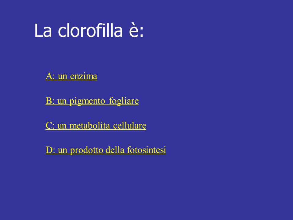 La clorofilla è: A: un enzima B: un pigmento fogliare C: un metabolita cellulare D: un prodotto della fotosintesi