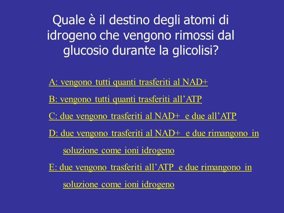 Quale è il destino degli atomi di idrogeno che vengono rimossi dal glucosio durante la glicolisi? A: vengono tutti quanti trasferiti al NAD+ B: vengon