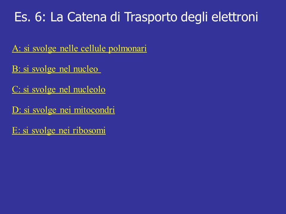 Es. 6: La Catena di Trasporto degli elettroni A: si svolge nelle cellule polmonari B: si svolge nel nucleo C: si svolge nel nucleolo D: si svolge nei