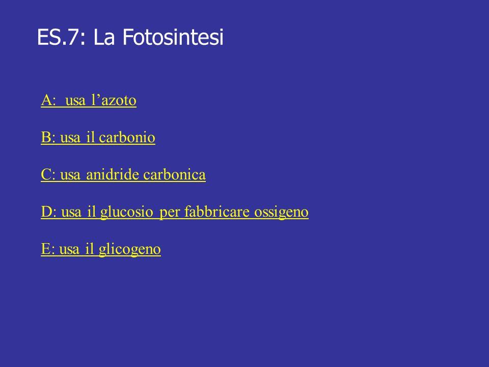 ES.7: La Fotosintesi A: usa lazoto B: usa il carbonio C: usa anidride carbonica D: usa il glucosio per fabbricare ossigeno E: usa il glicogeno