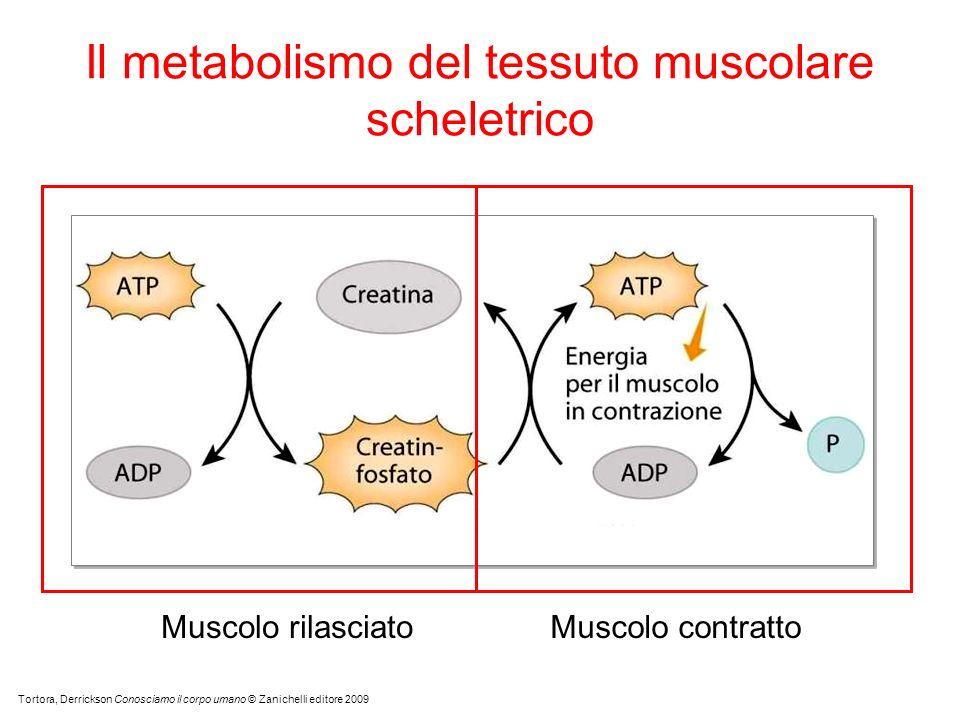 Tortora, Derrickson Conosciamo il corpo umano © Zanichelli editore 2009 Il metabolismo del tessuto muscolare scheletrico Muscolo rilasciatoMuscolo contratto