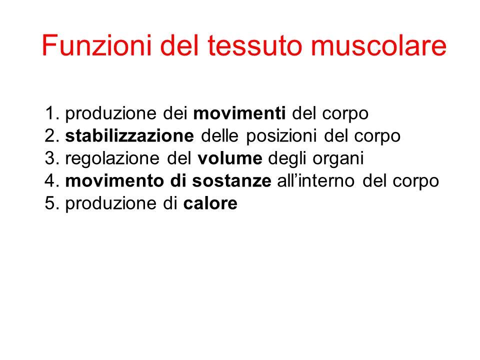 1.produzione dei movimenti del corpo 2. stabilizzazione delle posizioni del corpo 3.