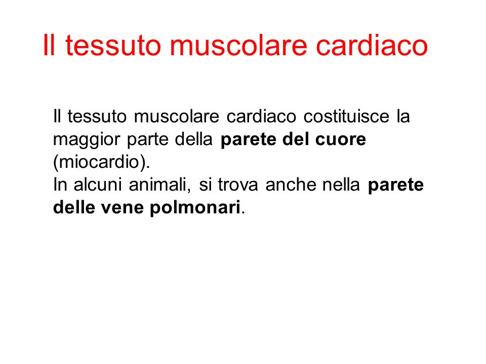 Il tessuto muscolare cardiaco costituisce la maggior parte della parete del cuore (miocardio).