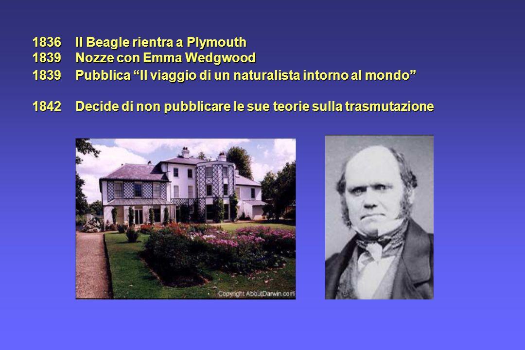 1839 Pubblica Il viaggio di un naturalista intorno al mondo 1842 Decide di non pubblicare le sue teorie sulla trasmutazione 1836 Il Beagle rientra a P