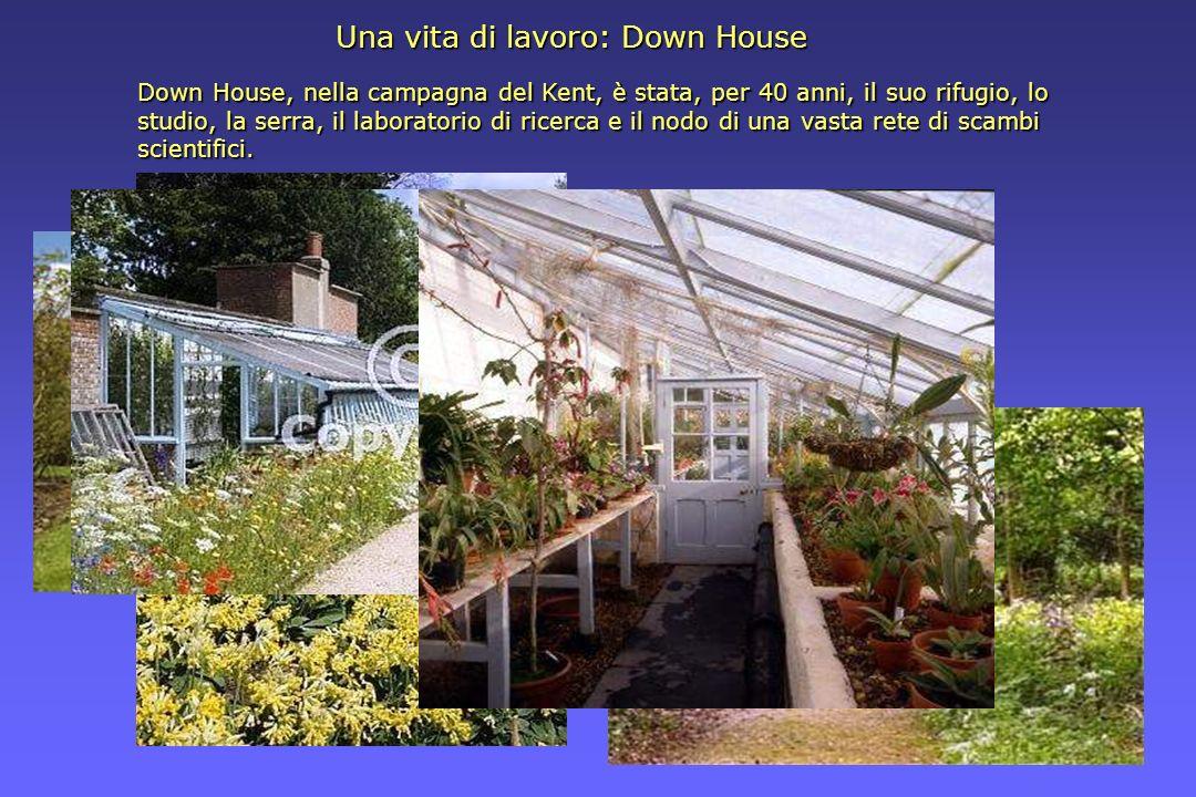 Down House, nella campagna del Kent, è stata, per 40 anni, il suo rifugio, lo studio, la serra, il laboratorio di ricerca e il nodo di una vasta rete